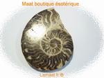 Ammonite grande taille