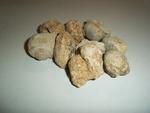 Pierres fossilisées