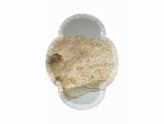 Pierre fossilisée ammonite sur deux faces
